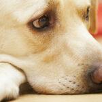 Кинолог назвал бесполезные для собак аксессуары | анонсы на oremontekvartir