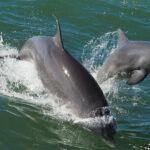 Ирландский политик заявил о пропаже знаменитого дельфина «из-за Путина» | анонсы на oremontekvartir
