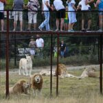 Подравшиеся в казанском цирке слоны переехали в парк «Тайган» в Крыму | анонсы на oremontekvartir