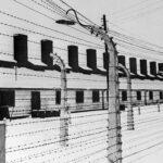 Мединский: умерших в концлагерях пленных надо отнести к жертвам геноцида | анонсы на oremontekvartir