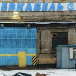 Обанкротившийся «Севкабель» пристраивает заводских котов | анонсы на oremontekvartir