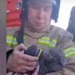 Житель Волгограда спас провалившуюся под лед собаку | анонсы на oremontekvartir