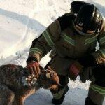 В Ленинградской области спасли брошенного хозяйкой тигрового питона | анонсы на oremontekvartir