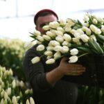 Врачи рассказали, какие цветы лучше дарить на 8 марта | анонсы на oremontekvartir