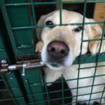 В Татарстане проверят информацию о собаке, подстреленной из арбалета | анонсы на oremontekvartir