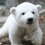 В Петербурге спасли истощенного детеныша тюленя | анонсы на oremontekvartir