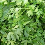 Названы растения, за которые дачникам грозят штрафы | анонсы на oremontekvartir